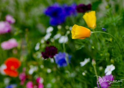 Les fleurs de la montagne www